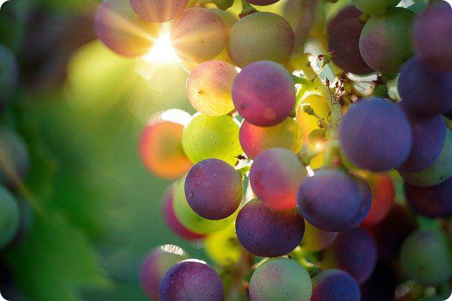 raisin-Bru-nO-pixabay-ldd-r